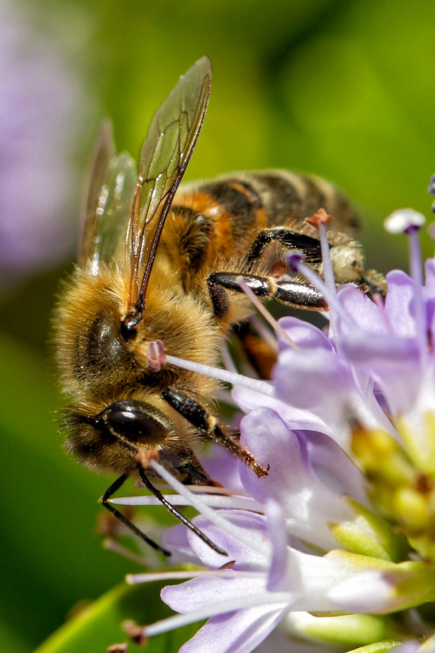 yanni bee on flower