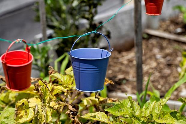 yanni colourful mini buckets hangin on wire in plot